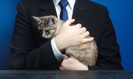 Businessman holds a cat. Bring your pet to work. Relaxation and antistress. Love for animals, cat lover. Boss is also an ordinary man. Animal welfare, custody adoption of homeless abandoned pets.