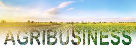Word inscription agribusiness on agricultural plantation field. Crop and livestock growers. Agroindustry food industry. Production of farm products. Farm Lending. Support, subsidization of landowners. Foto de archivo