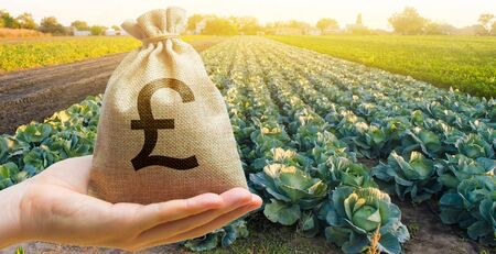 Farmer holding a money bag on the background of cabbage plantations. The development of agriculture industry. Agricultural startups. Lending and subsidizing farmers. Investment and profit. Countryside Stock Photo