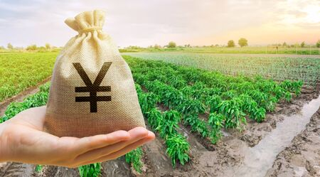Farmer holding a money bag on the background of peppers plantations. The development of agriculture industry. Agricultural startups. Lending and subsidizing farmers. Investment and profit. Countryside