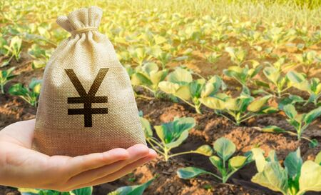Farmer holding a money bag on the background of cabbage plantations. The development of agriculture industry. Agricultural startups. Lending and subsidizing farmers. Investment and profit. Countryside Imagens