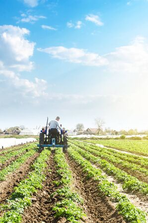 A farmer drives a tractor across potato plantation field. Processing and cultivation of soil. Improving quality of ground to allow water and air to pass through to roots. Farming agricultural industry Imagens