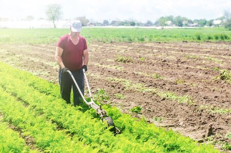 Farmer cultivates a carrot plantation. Cultivating soil. Loosening earth to improve access water and air to roots of plants. Removing weeds and grass. Crop care. Farming agricultural industry