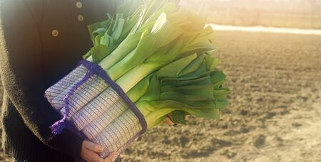 Fresh leek in net bags ready for sale in the hands of a farmer. Harvest. Harvesting. Agriculture and farming. Freshly picked. Agribusiness. Agro industry. Growing Organic Vegetables