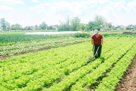 Farmer cultivates a carrot plantation. Cultivating soil. Loosening earth to improve access water and air to roots of plants. Removing weeds and grass. Farming and growing food. Work on the ground