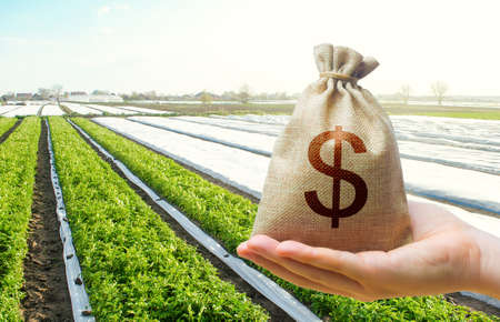A hand holds out a dollar money bag on a background of potato plantation farm fields. Lending farmers for purchase land and seed material, modernization. Support and subsidies. Farm loans