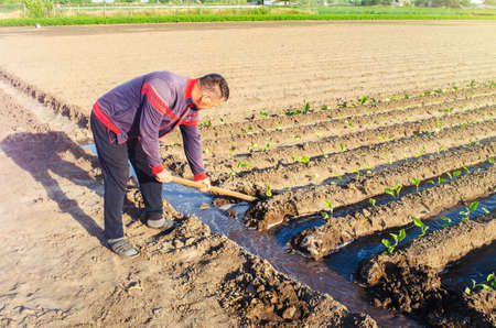 The farmer manages the irrigation of the plantation field with a shovel. Irrigation system, shut-off and flow redirection. Care of agricultural plants. Heavy watering. Manual labor. Agriculture farm