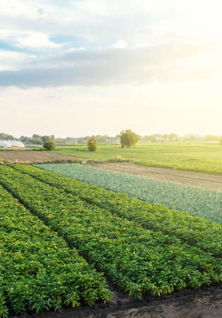 Landscape with many farming agricultural fields. Growing food on farm. Aerial view of beautiful countryside farmland. Agroindustry and agribusiness. Wonderful european summer countryside landscapes.