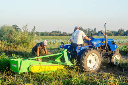 KHERSON OBLAST, UKRAINE - September 14, 2020: farm workers on a tractor dig out potatoes. Farming and agriculture. Harvesting potatoes at the plantation, sorting and packing in mesh bags.