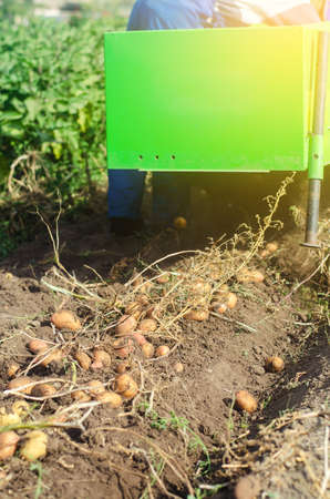 The process of digging potatoes out of the ground. Harvesting campaign with a digging machine. Farming, agriculture. Countryside farmland. Using machines to improve food production. Stock Photo