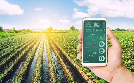 The farmer receives information on the state of the crop and conditions in agricultural field by phone. Process of crop maturation, moisture and soil nutrition. Advanced technologies