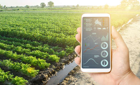 Phone with data and infographics on the background of a farm field plantation. Innovative technologies in the agroindustry and food production. Process of crop maturation, moisture and soil nutrition.