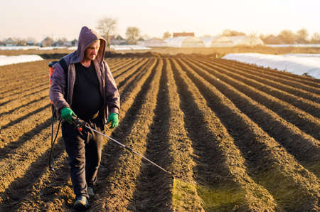 The farmer treats the field from weeds and grass for growing potatoes. Use chemicals in agriculture. Harvest processing. Agriculture and agribusiness. Protection and care. Growing vegetables Archivio Fotografico - 167121642