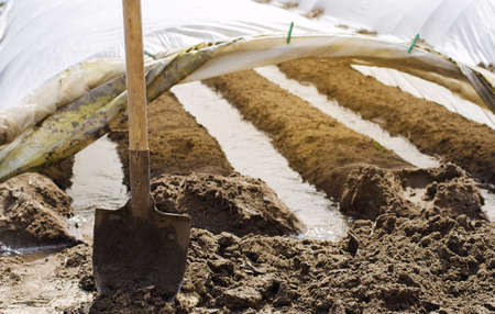 Irrigation rows under agrofibre in small greenhouses. Spunbond to protect against frost and keep humidity of vegetables. Farming and agriculture. Countryside. Growing potatoes. Focus on the shovel. Archivio Fotografico - 167122004