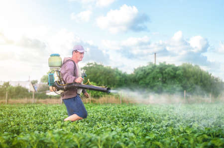 Male farmer with a mist sprayer processes potato bushes with chemicals. Protection of cultivated plants from insects and fungal infections. Control of use of chemicals growing food. Increased harvest.