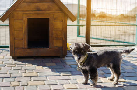 Beautiful black pooch dog near the booth on a sunny day. House for an animal. Selective focus