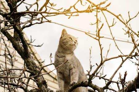 Beautiful gray kitten on a tree. Pet. Animal. Selective focus