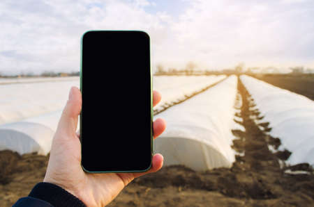Mobile phone with a blank empty screen on the background of agricultural greenhouses in the farmer's hand. Innovative modern technologies in agribusiness. Assessment of the quality of the crop harvest Archivio Fotografico