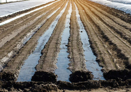 Irrigation rows of carrot plantations. Natural watering after sowing seeds. Moisturize soil and stimulate growth. Agriculture agribusiness, farmland. New farming planting season. Selective Focus