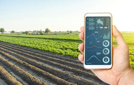 Hand with a phone on the background of a farm field. Quality control. Innovative modern technologies in agriculture. Collect data, forecasts to improve harvest quality. Internet of Things. Monitoring