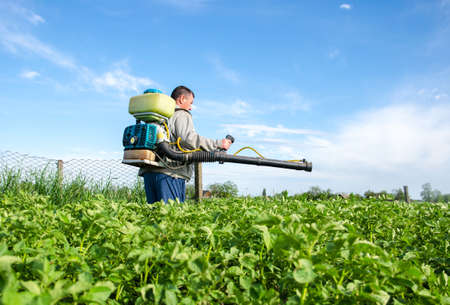 Male farmer with a mist sprayer processes potato bushes with chemicals. Protection of cultivated plants from insects and fungal infections. Control of use of chemicals. Farming growing vegetables