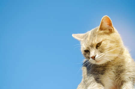Funny gray cat on a background of blue sky. Pet portrait. Striped kitten. Animal. Copy space. Selective Focus