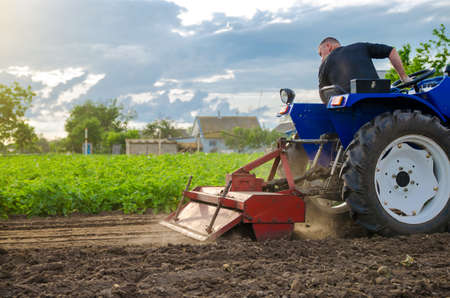 A farmer is cultivating a field before replanting seedlings. Milling soil, crushing and loosening ground before cutting rows. Farming. Preparatory earthworks. Agriculture and agribusiness