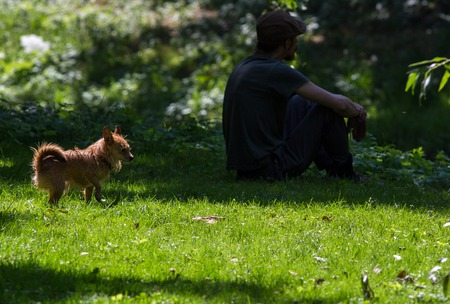 old man standing: Man silhouette old long beard, standing on the lawn with the dog. Stock Photo