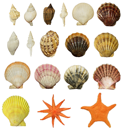 sinks: set of beautiful shells of molluscs isolated on white background Stock Photo