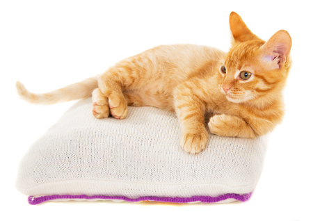 declare: redhead kitten lies on a pillow isolated on white background