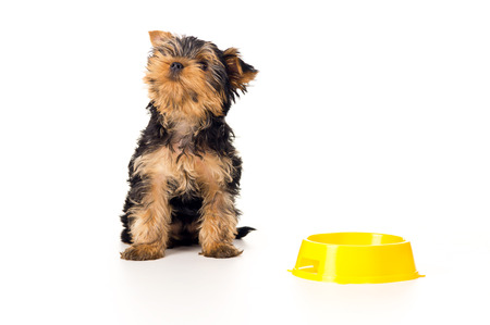 tilt views: puppy sitting with colorful bowl