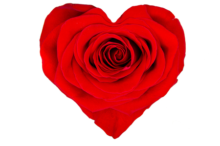 valentina: Red rose in the shape of a heart on a white background