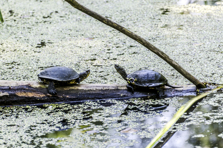 ze: Turtles on a wood