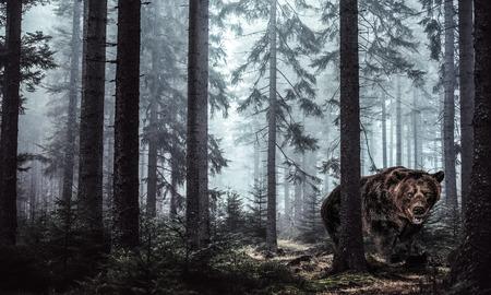 grizzly beer in het bos voor commercials Stockfoto