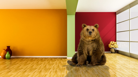 dog salmon: grizzly bear sitting on the floor