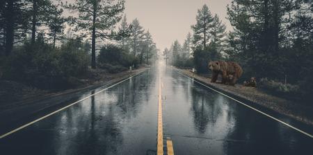 beer familie lopen over de weg Stockfoto