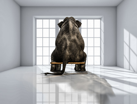 lonely elephant in the room for commercials