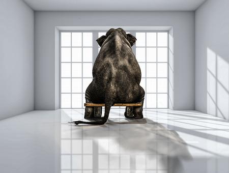 einsamer Elefant im Raum für Werbung Standard-Bild