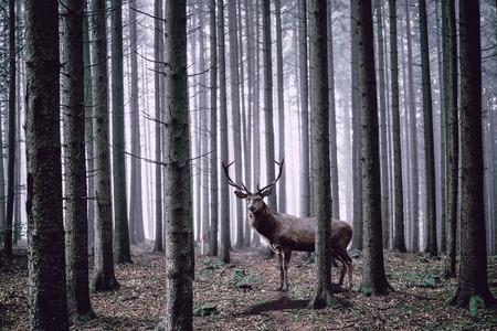 Ook in bos