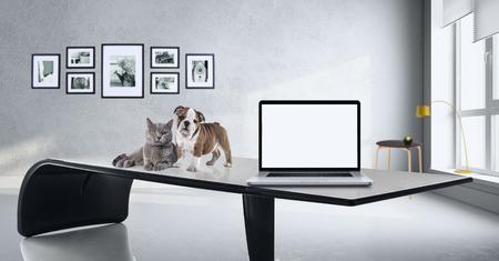 Puppy en kat in het kantoor