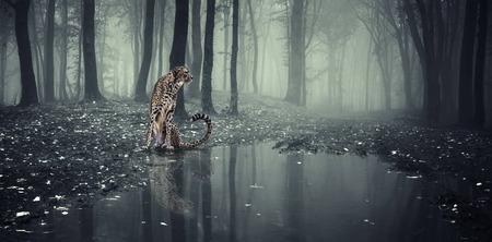 jachtluipaard jacht in het bos