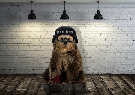 gek beer in de kamer Stockfoto