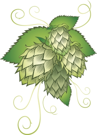liane: hops with leafs isolated on white