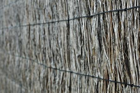 brushwood: Blured natural brushwood fence, background