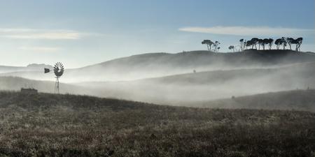 eucalyptus trees: Traditional Australian windmill on farm, fog between hills, morning dew