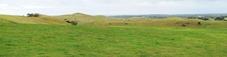 Green grass, black cows on hills, trees and cloudy sky panorama at Mornington Peninsula, Victoria, Australia photo