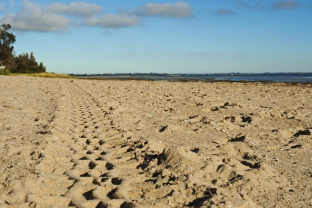 Close-up to tyre track on sandy beach with shells, trees, blue sky and lined up clouds trees in background photo