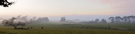 Pastoral Australian panorama in early morning sunrise at farmland with fog patches, cows and eucalyptuses in Victoria, Australia photo