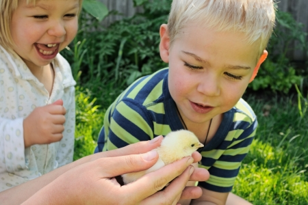 Boy and girl in pajamas in morning excited to see newborn fluffy chick in adult hands photo