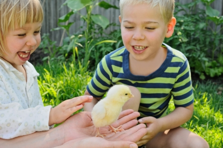 pat: Boy and girl in pajamas in morning, girl trying to pat newborn fluffy chicken in adult palm